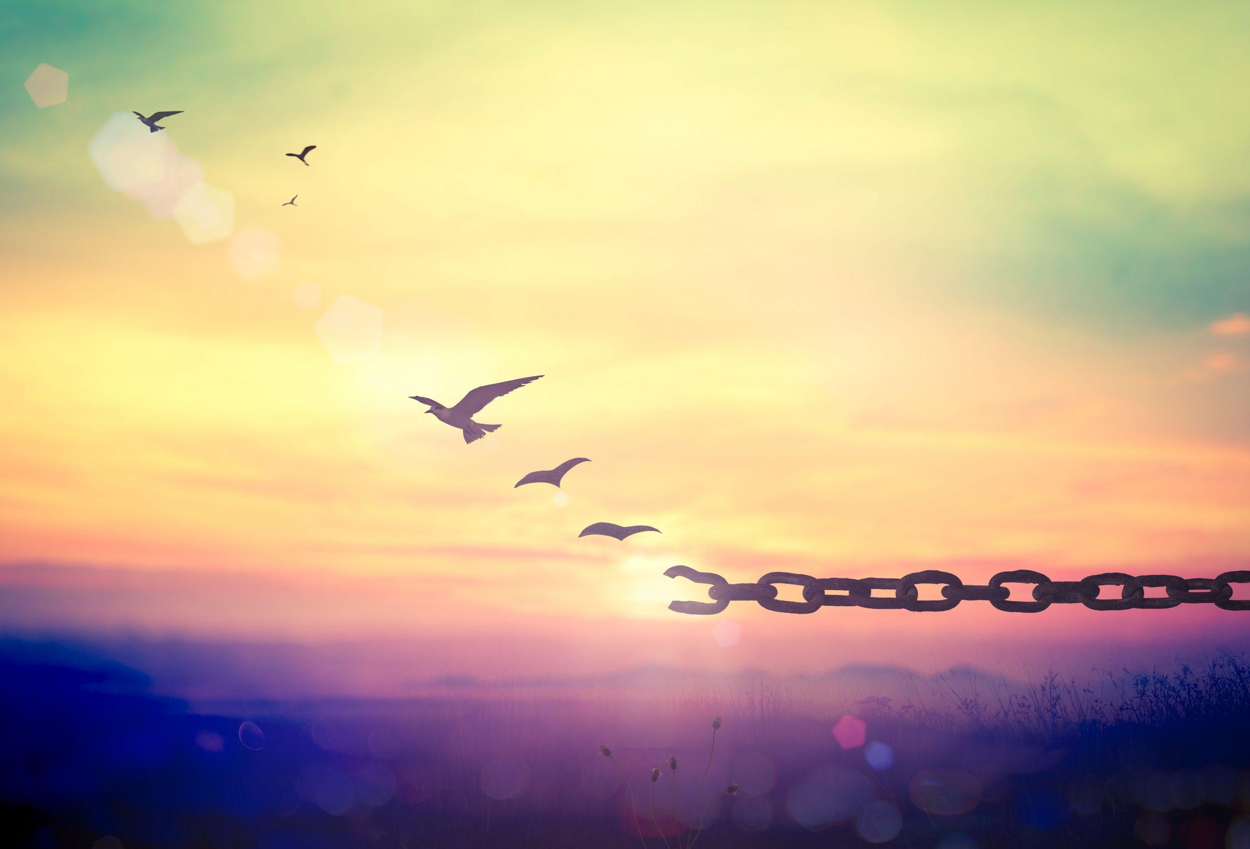 #אקרופוליסמהבית   הרצאות און ליין – מעבדות לחירות